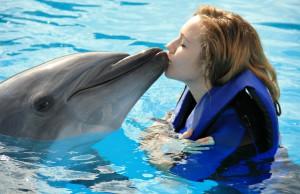 Dolphin-Swim-in-Bali